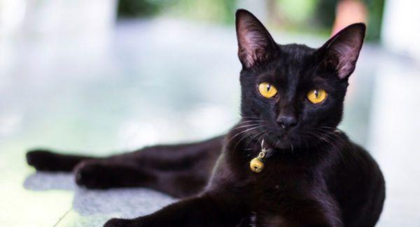 جنایت بیرحمانه پشت تجارتی کثیف باسلاخی گربه و حیوانات خانگی
