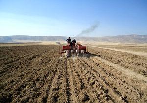 45 هزار هکتار از مزارع کشاورزی شهرستان آوج به زیر کشت گندم می رود