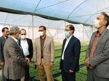 ظرفیت ۲۰۰ میلیونی تولید نشاء محصولات گلخانهای در جنوب کرمان