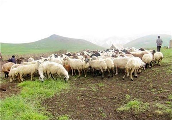 تولیدات عشایری خراسان شمالی با استفاده از دانش نوین به۸۳۰۰ تن رسید