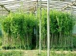 کنترل آفات با افزایش سطح آگاهی کشاورزان و باغداران جهت خرید و کاشت نهال سالم و گواهی شده و جلوگیری از ورود نهال آلوده و بدون لیبل