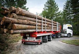 ایران به دنبال زراعت چوب در قالب کشاورزی فراسرزمینی/ اعلام میزان تسهیلات برای زراعت هر هکتار چوب