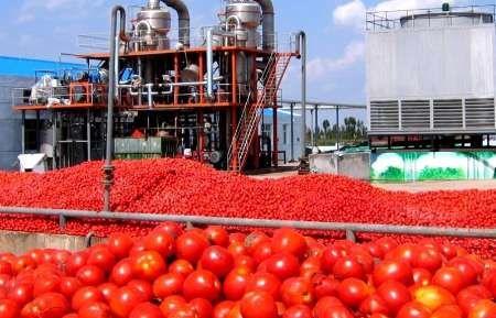 تولید سالانه بیش از ۲۵۰ هزار تن رب گوجه فرنگی در آذربایجان غربی