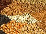 استمرار توزیع نهاده های دام و طیور در گیلان؛ تولید کنندگان مورد حمایت قرار میگیرند