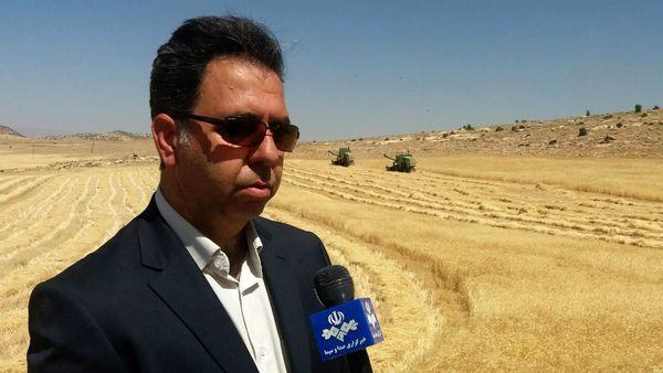 خرید تضمینی ۶۲ هزار تن گندم از کشاورزان شهرستان اسلام آباد غرب