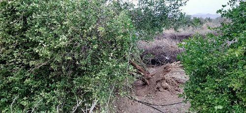 رگبار و تند باد به کشاورزی قیروکارزین خسارت زد