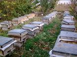 49 تن عسل در زنبورستانهای شهرستان آبیک تولید شد