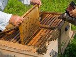 توزیع سهمیه شکر زمستانه بین زنبورداران شهرستان خرم آباد