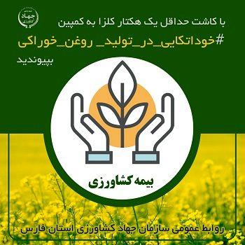 حق بیمه کلزا با مطالبات کشاورزان تهاتر می شود