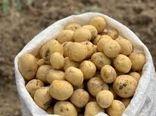 خرید توافقی بیش از ۷۰۰ تن سیب زمینی سردخانه ای جهت بازار مصرف استان تهران