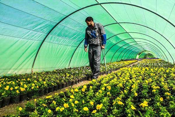 اجرای طرح سایهبان  در اراضی کشاورزی