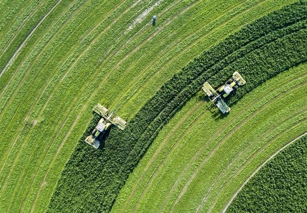 پیشگیری از کمبود نهادهها با تامین علوفه از زمینههای زیر کشت کشاورزان