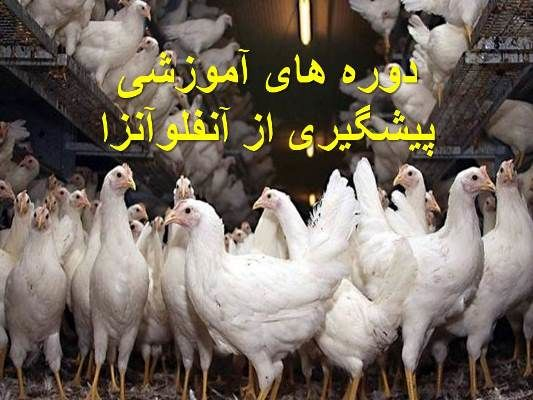 دورههای آموزشی پیشگیری از آنفولانزای پرندگان