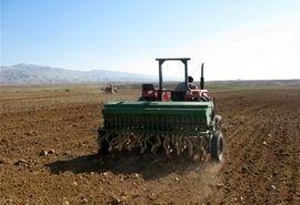 آغاز کشت گندم در بوشهر