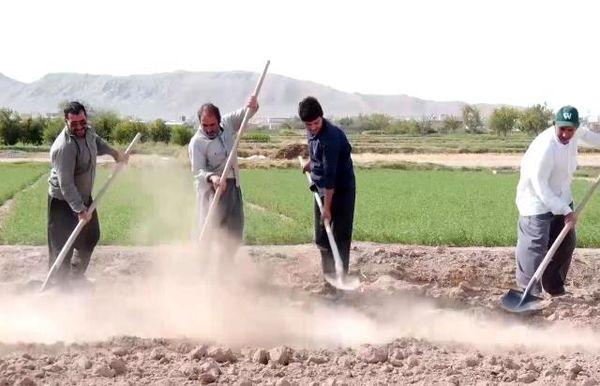 انجیر بهترین جایگزین برای کشت غلات در شرق اصفهان