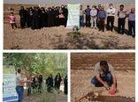زنان روستایی شهرستان آبیک با کشت گل گاوزبان در مزارع کشاورزی آشنا شدند