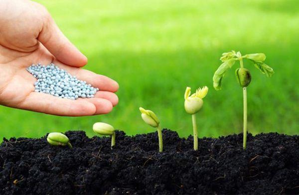 تامین ۴۵۰ هزار تن انواع کود یارانه ای برای شروع کشت پائیزه