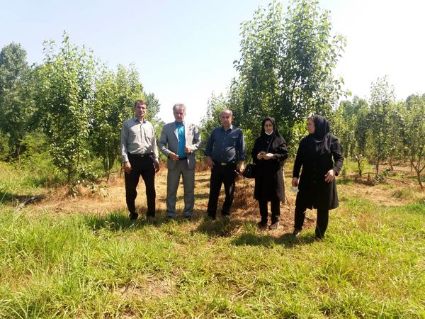 بازدید مدیر جهاد کشاورزی لاهیجان از مجتمع ۱۲ هکتاری شهرستان