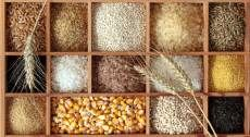 خرید بذر غلات در قزوین از مرز ۴ هزار تن عبور کرد