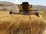 رشد ۳۵۳ درصدی تولید گندم طی ۴۰ سال اخیر