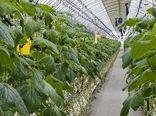 90 درصد مشکل کمبود سبزیجات در روسیه بر طرف میشود/ ساخت 50 مجموعه گلخانهای با وسعت 650 هکتار در سال 2017