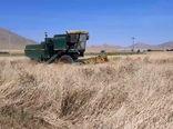 برداشت ۱۱ هزار تن گندم از دوهزار و ۵۰۰ هکتار مزارع شهرستان دهاقان