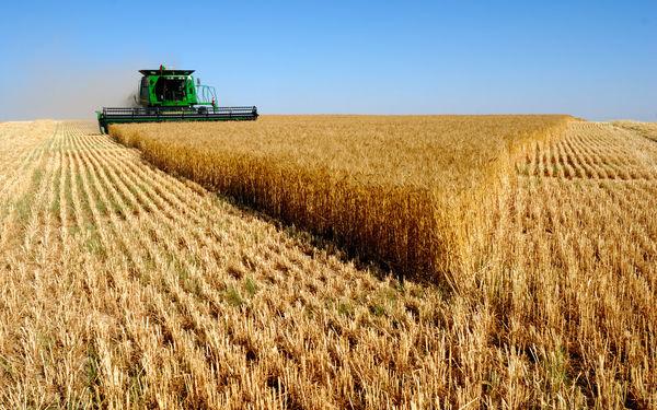 افزایش 500 میلیارد تومانی بودجه صندوق بیمه کشاورزی