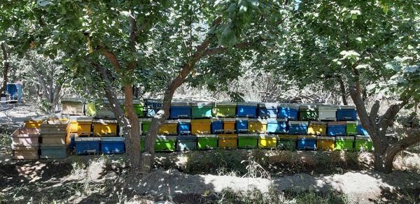 سرشماری واحد های زنبورداری دهمویز تا 19 مهرماه ادامه دارد