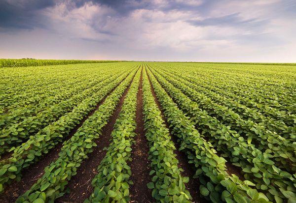 حمایت گسترده کشورهای توسعه یافته از بخش کشاورزی