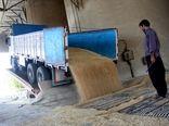 بیش از ۶۱۴ هزار تُن گندم مازاد کشاورزان کردستان خریداری شد