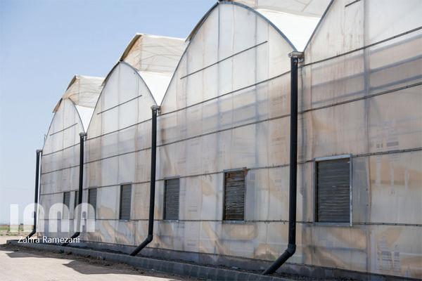 سرمایه گذاری بخش خصوصی برای توسعه گلخانه ها در شهرستان سراوان