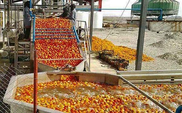 روند جذب سیب صنعتی توسط واحدهای صنایع تبدیلی استان تسریع یابد