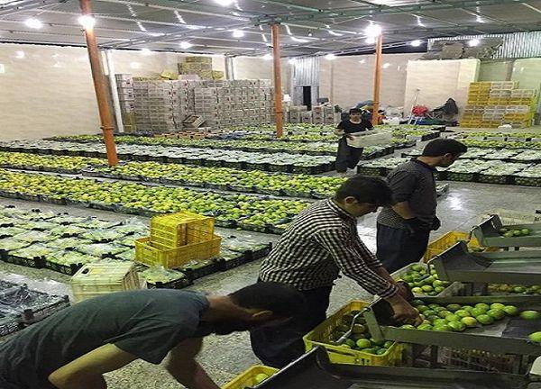 ایجاد 260 اشتغال جدید در بخش کشاورزی قیروکارزین