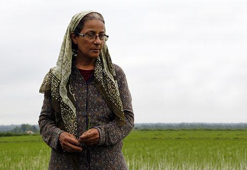 کاری کارستان؛ با یک گل هم بهار میشود