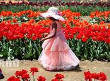 مزرعه گل لاله