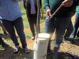 اجرای عملیات تعویض تاج درختان گردو در شهرستان اهر