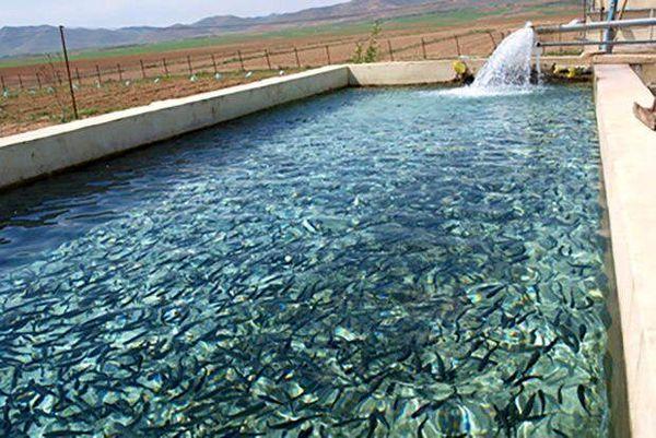 رقابت استان لرستان در تولید آبزیان با استانهای ساحلی