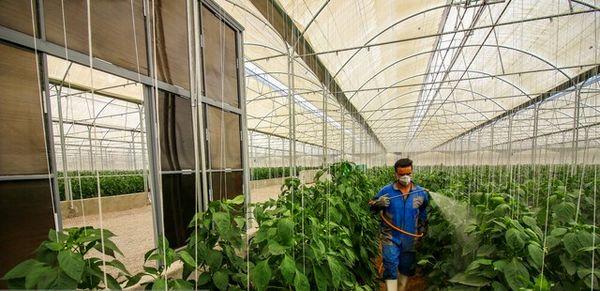 تاکید برخی کشاورزان اصفهانی به کشت سنتی به دلیل هزینههای بالای کشت گلخانه ای