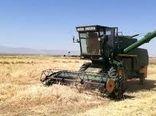 برداشت جو غصیل از بزرگترین مزرعه در کشور
