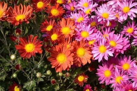 20 هزار بوته گل در شهر بیرجند کاشته شد