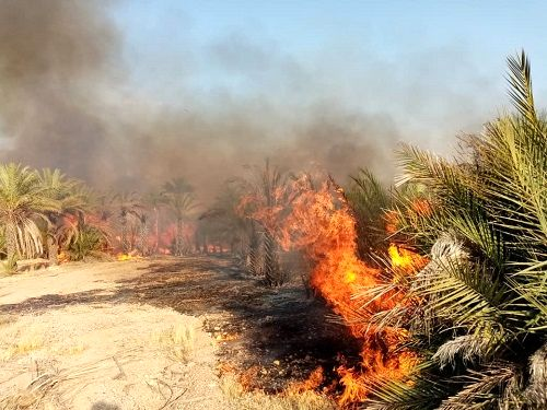 آتش در نخلستان های پیر غیب قیروکارزین شعله می کشد