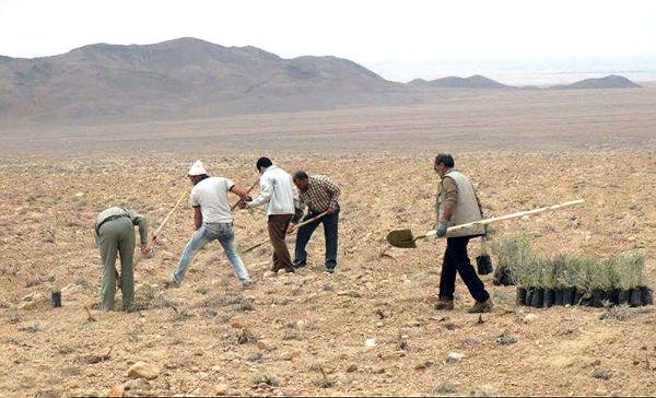 اجرای عملیات بیابانزدایی در جنوب غرب تهران