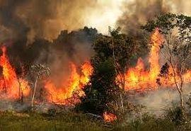 آتشسوزی جنگلهای بلوط بلند چهارمحال و بختیاری مهار شد
