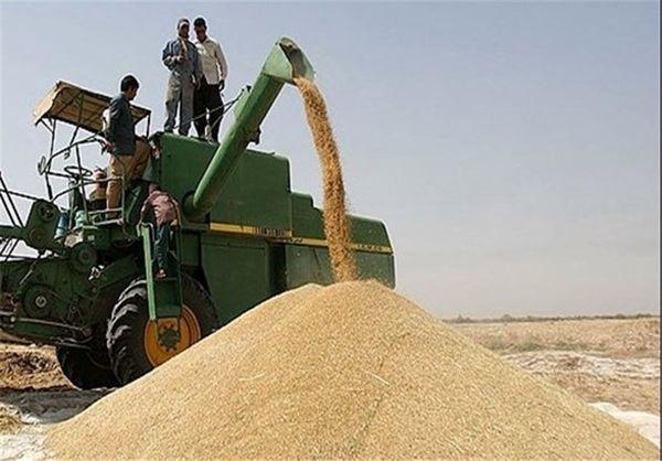 خرید گندم در گلستان از مرز یک میلیون و 53 هزار تن گذشت