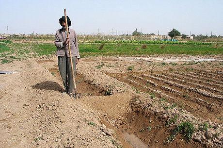 کشت محصولات تابستانه در 350 هزار هکتار از اراضی خوزستان