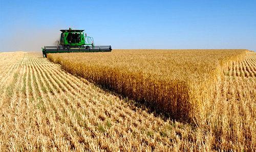 پیش بینی برداشت ۲۰ هزار تن گندم در برخوار