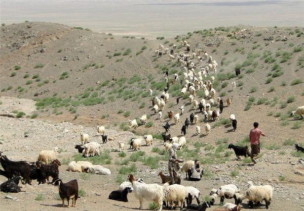 خریـد دام مـازاد عشایـر استـان کرمان در طرح خشکسالی