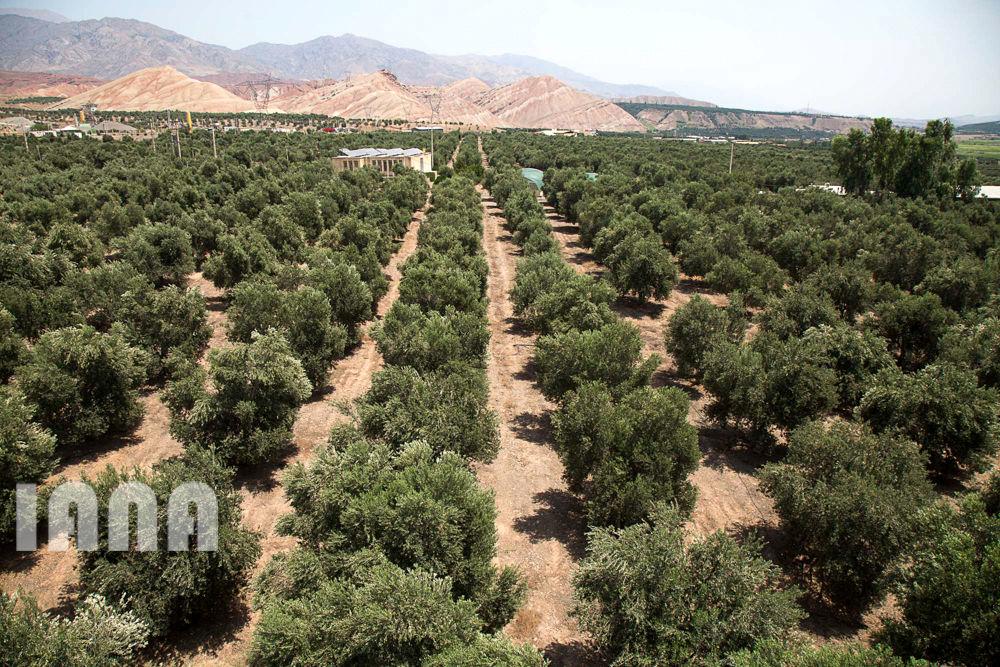 کشاورزی استان زنجان