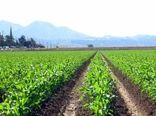 ۲۷ هزار هکتار از مزارع کشاورزی استان قزوین به زیر کشت بهاره ذرت میرود 