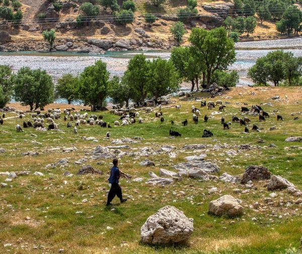 عشایر استان تهران در مناطق کوهستانی و حاشیه رودخانهها اتراق نکنند